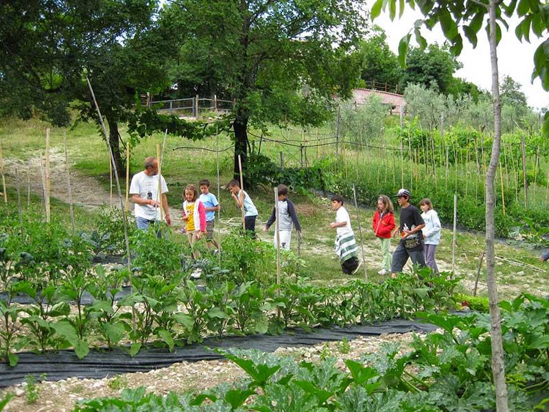 Bambini alla scoperta dell'orto