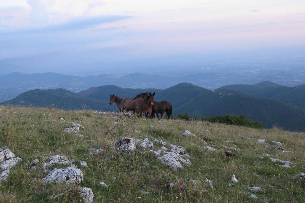 Escursione notturna sul Monte Tancia con cavalli